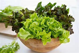 Image result for lettuce images