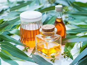 Image result for Euclyptus oil