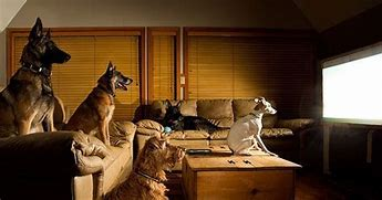 Image result for free pics of animals watching tv