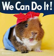 Image result for guinea pig rosie the riviter