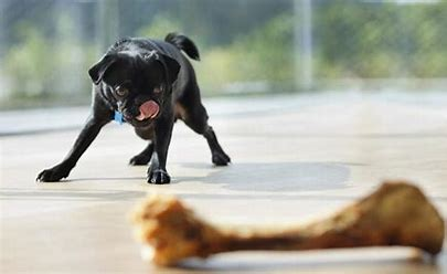 Image result for free pictures of dog with a bone