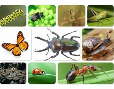 Image result for minibeast photos
