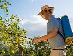 Résultat d'images pour image homme avec insecticide