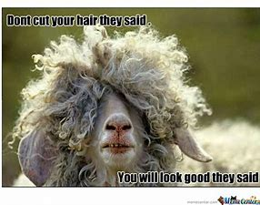 Image result for in need of a haircut
