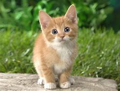 Résultat d'images pour image de chaton mignon