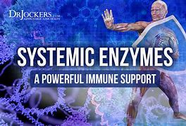 Image result for systemic enzymes what are they