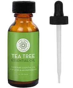 Image result for tea tree essential oil