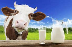 Image result for mleko krowie