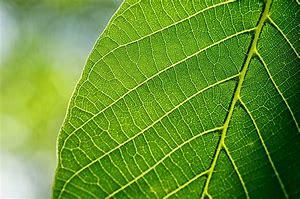 Image result for leaf