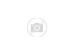 Image result for tamerice pianta