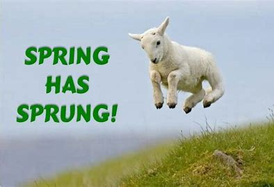 Image result for spring has sprung
