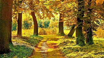 Image result for autumn landscapes