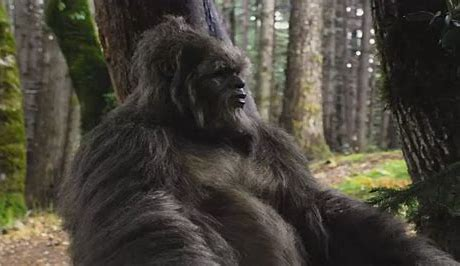 Image result for images of talking sasquatch
