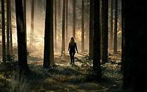 Image result for walk in forest