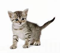 Résultat d'images pour images chats