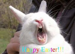 Image result for Funny Easter Bunny