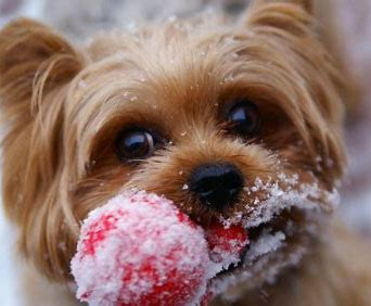 Image result for pet friendly ice melter