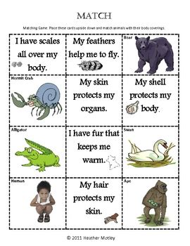 science animal body coverings by mrs motley solteacher