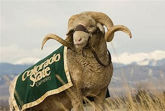 Image result for colorado state university mascot