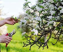 Image result for free picture of pruning