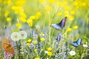 Obraz znaleziony dla: to co lata nad łąką