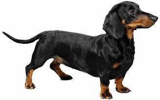 Image result for top 10 dog breeds in india