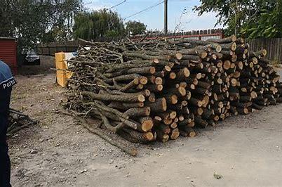 tarnita-lemn-confiscat