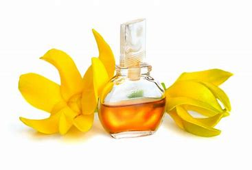 Image result for ylang ylang essential oil