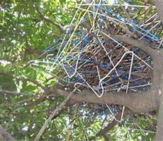 カラスの巣 に対する画像結果