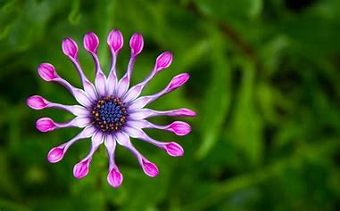 Image result for beautifil flower