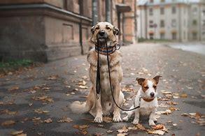 Image result for dog walking