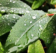 梅雨 に対する画像結果