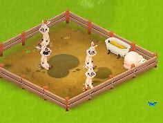 ヘイデイ 豚 に対する画像結果