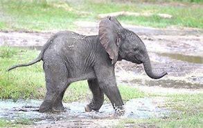 Bildergebnis für babyelefant