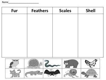 animal body coverings science center activity classifying