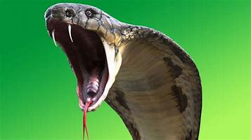 Image result for snake attack