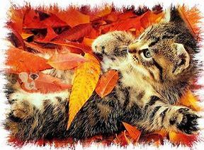 Résultat d'images pour image de chatons en automne
