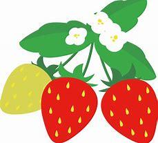 苺イラスト 無料 に対する画像結果