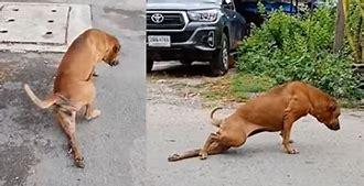 脚を怪我した犬 に対する画像結果