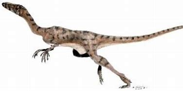 Image result for Micropachycephalosaurus