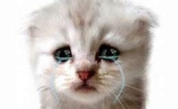 Résultat d'images pour  un chat minion