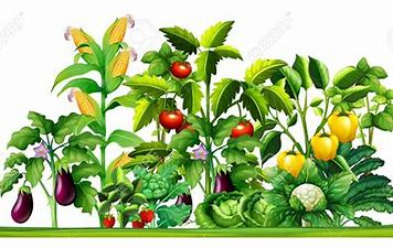 Image result for clipart growing vegetables