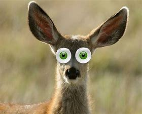 Image result for images deer in the headlights look