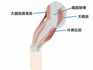 腸脛靭帯 フリー画像 に対する画像結果