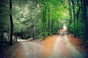 Image result for free pictures of split in the road in the woods