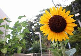 夏の花 に対する画像結果