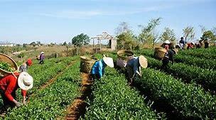 Resultado de imagem para imagens de homens trabalhando no campo