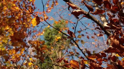 Image result for voices from the wind, fallen leaves
