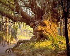 Résultat d'images pour champignons sur tronc d'arbre mort