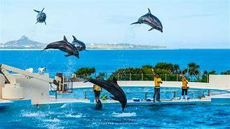 沖縄 海 無料 写真 に対する画像結果